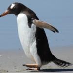 Google Penguin 2.0 è stato rilasciato! Quale impatto SEO?