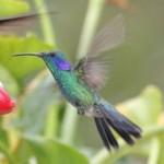 È arrivato Google Hummingbird, alias Google Colibrì